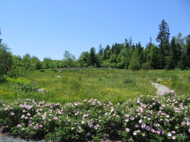 view of the middle meadow in June