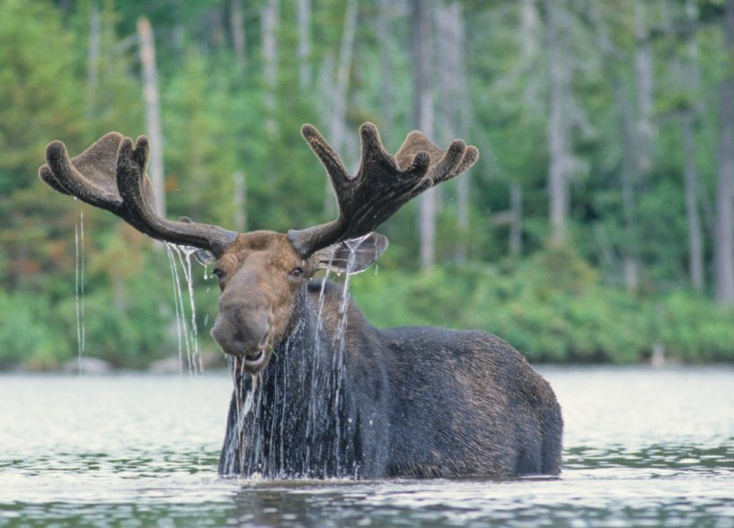Wildlife Watching Tours in Maine
