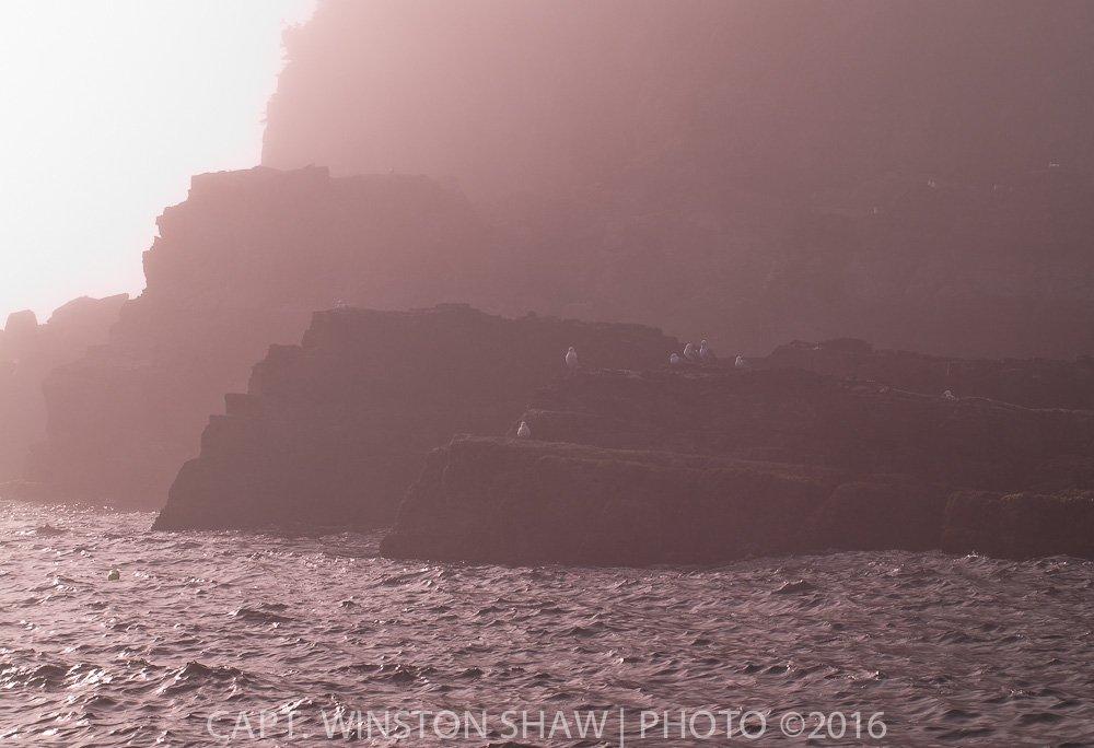 Seacliffs in fog