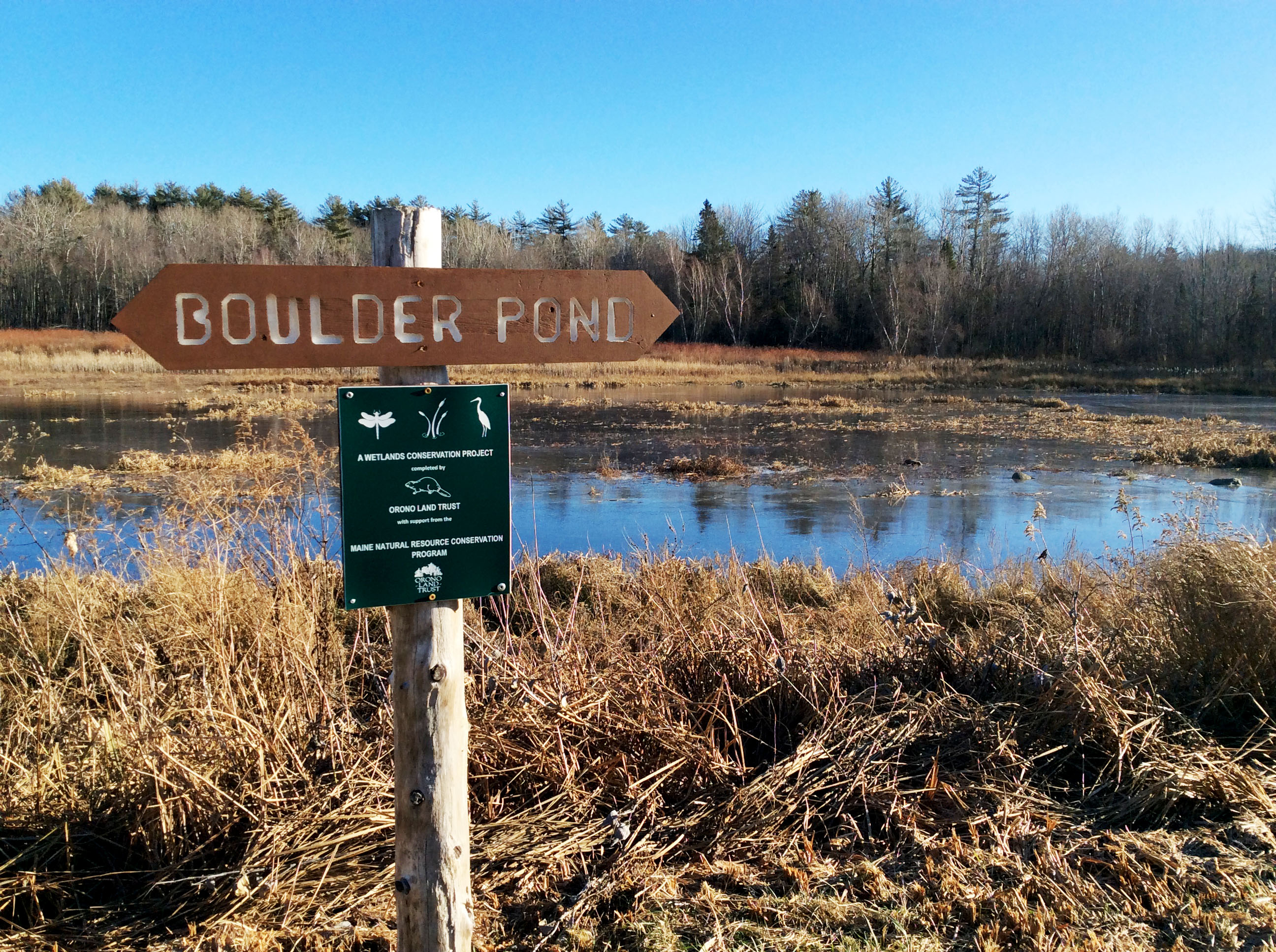 Boulder Pond on Taylor Road in Orono is the site of a wetlands remediation project undertaken by OLT with state and local support. A series of ponds in this area af-ford opportunities for all-seasons birding and winter ice-skating.