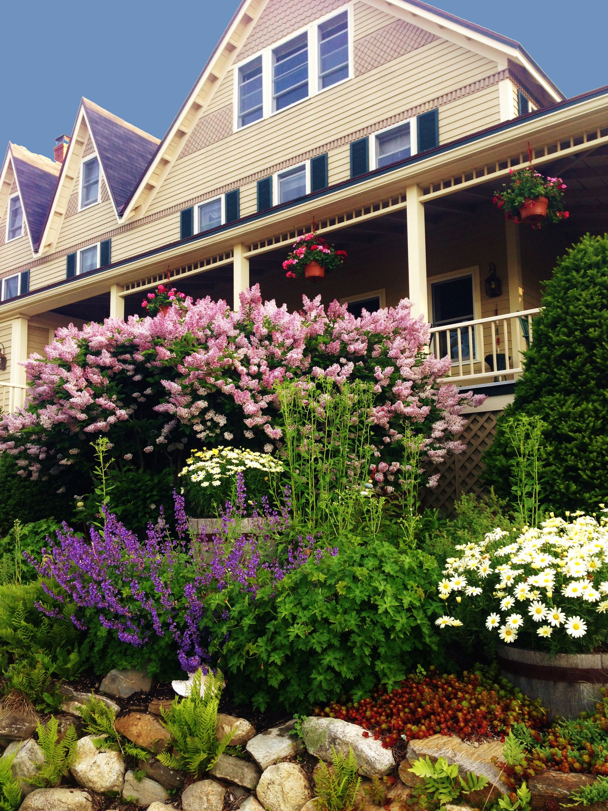 When the lilacs are in bloom it is hard to even smell the salt air!