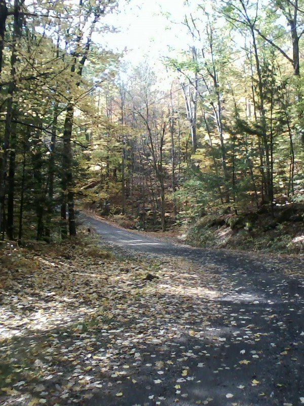 Camp road in fall