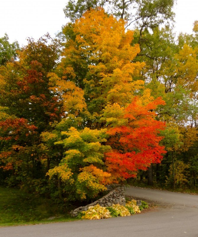 Vibrant colors of trees at the Greenville Inn