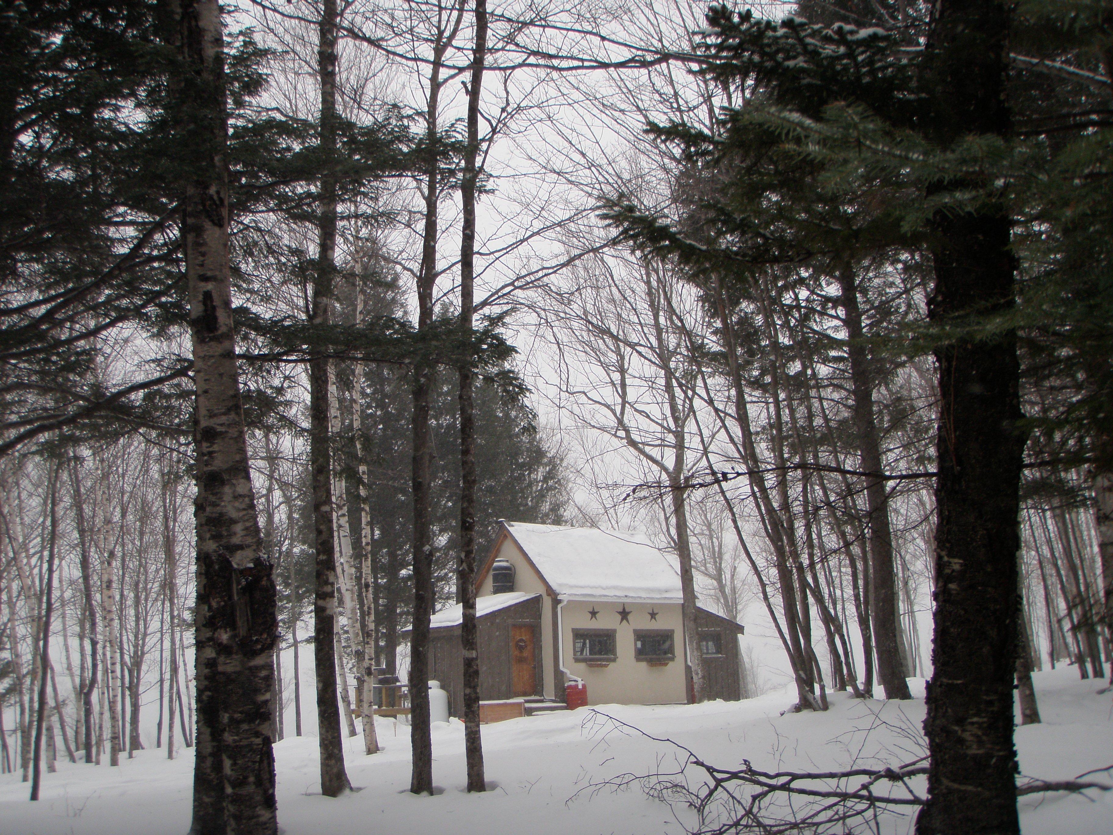Among the tall hemlocks and birch