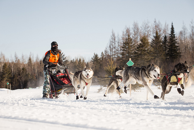 Dog Sledding Adventures & Tours