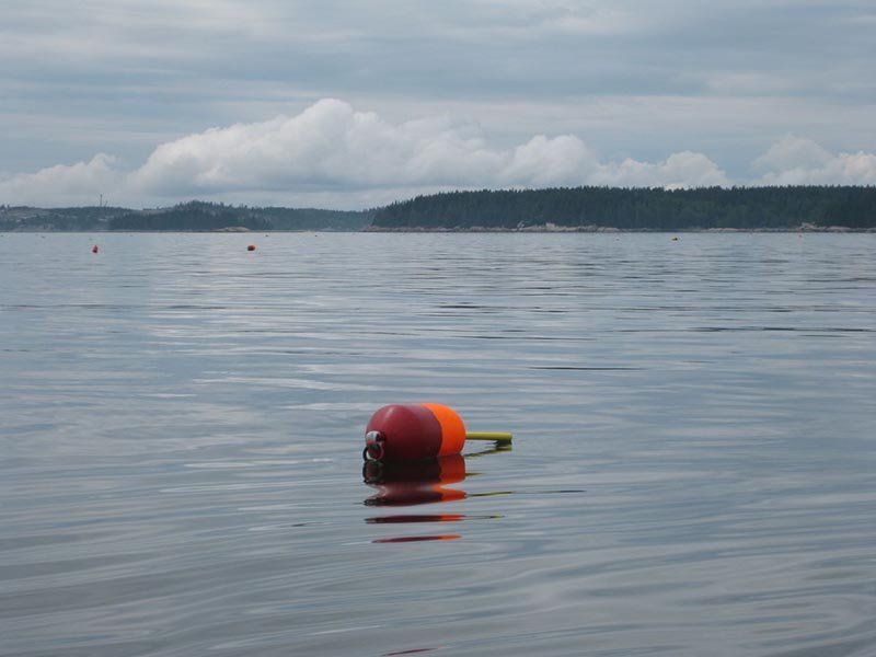 Maine lobster buoy