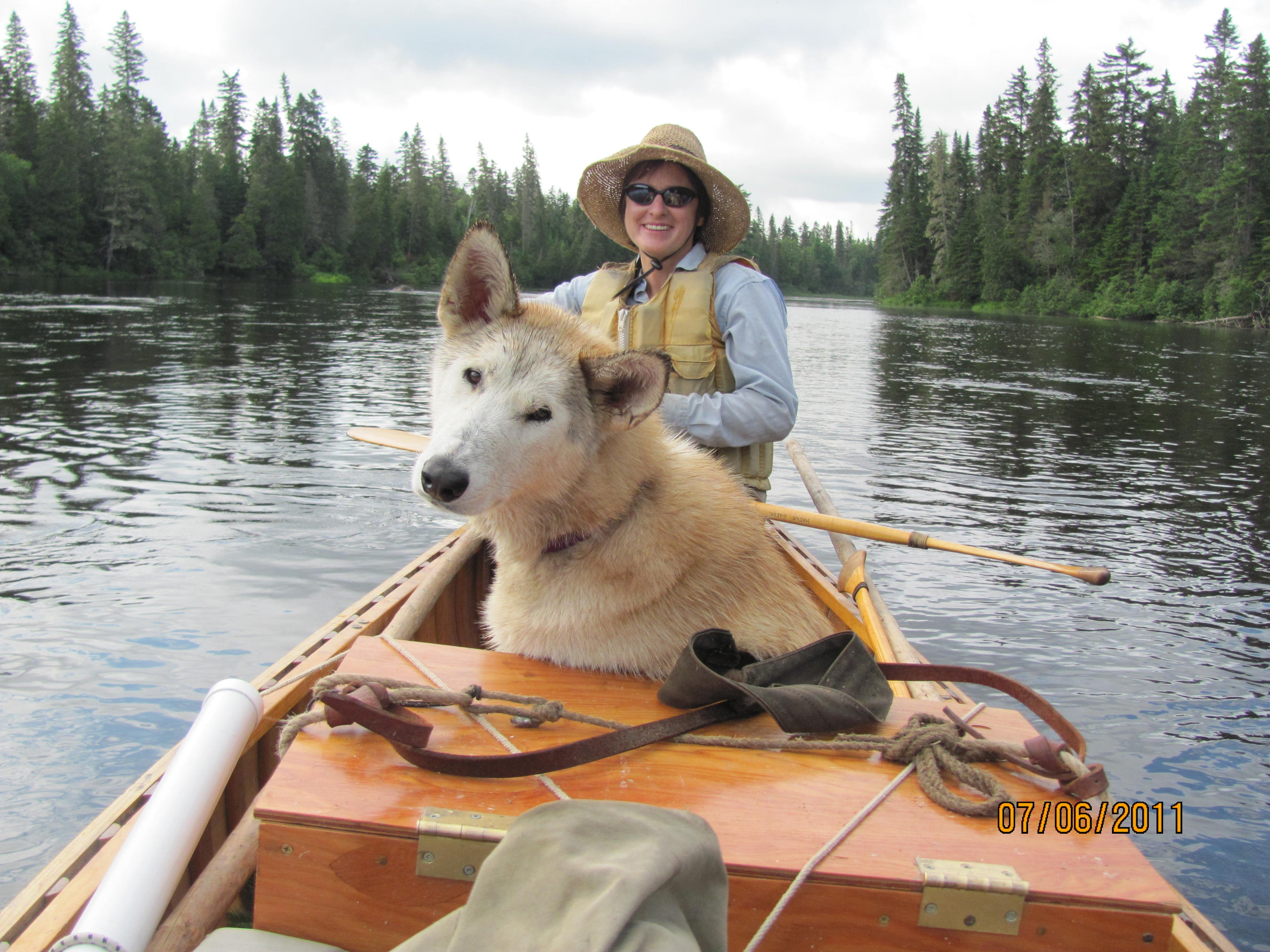 Vixen, one of our sled dogs, enjoys a relaxing canoe ride. Often times, one of the dogs will come with us on our trips.