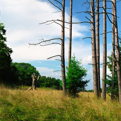 Holbrook Island Sanctuary