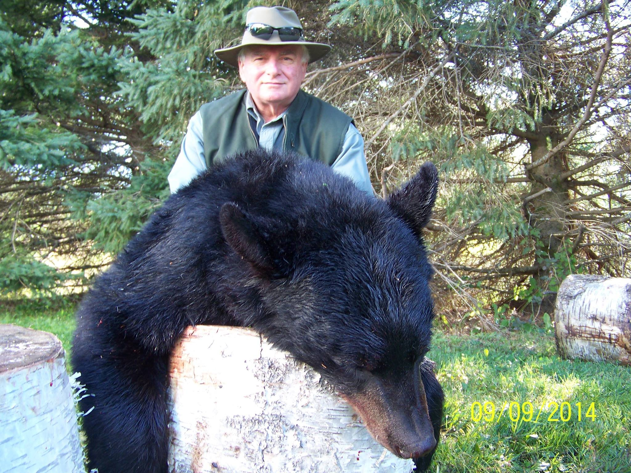 Lots of opportunities to view Maine's elusive black bear.