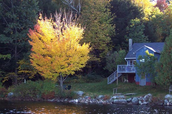 Cottage and maple tree in fall