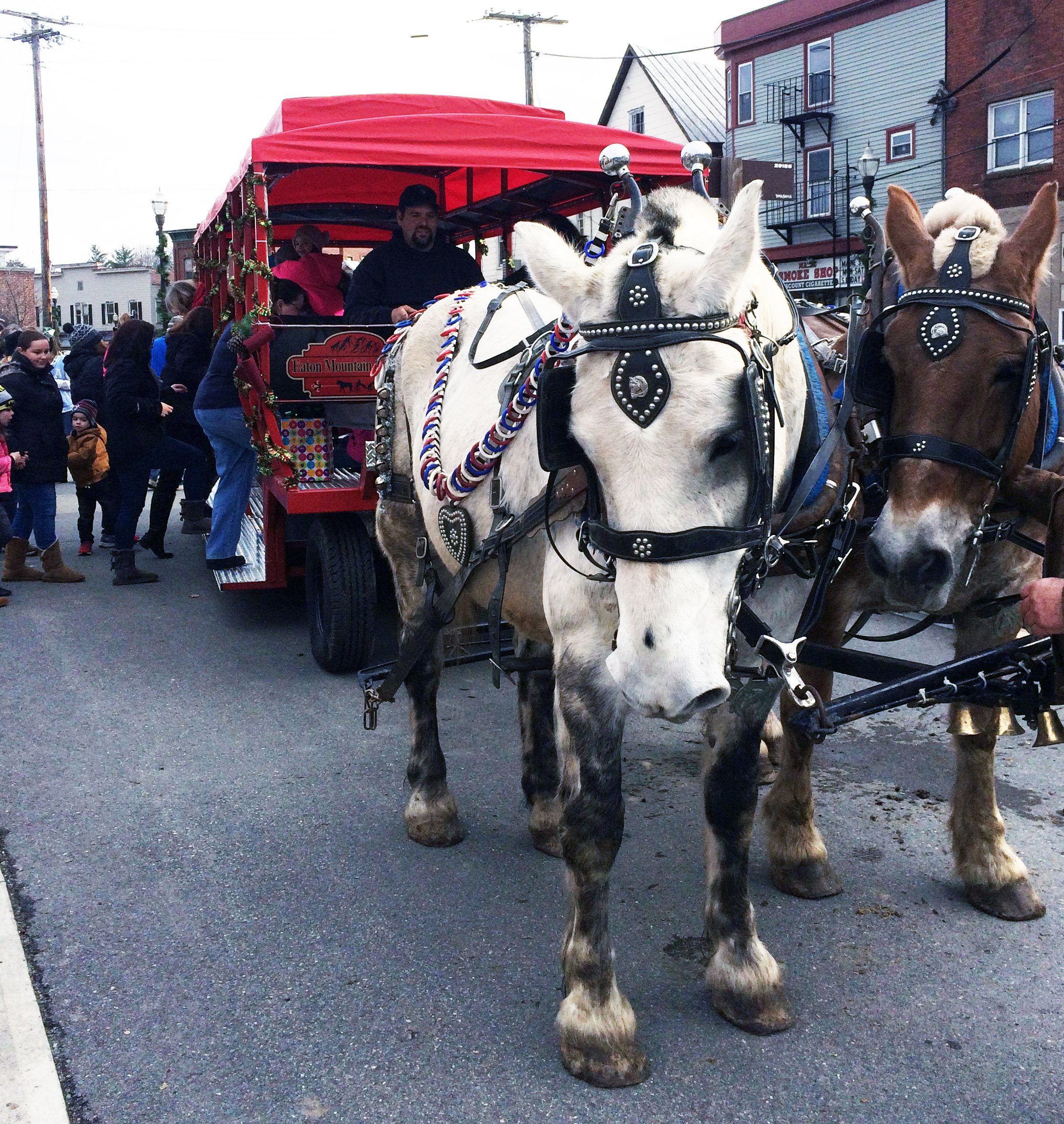 Join us for carriage rides, a local favorite!