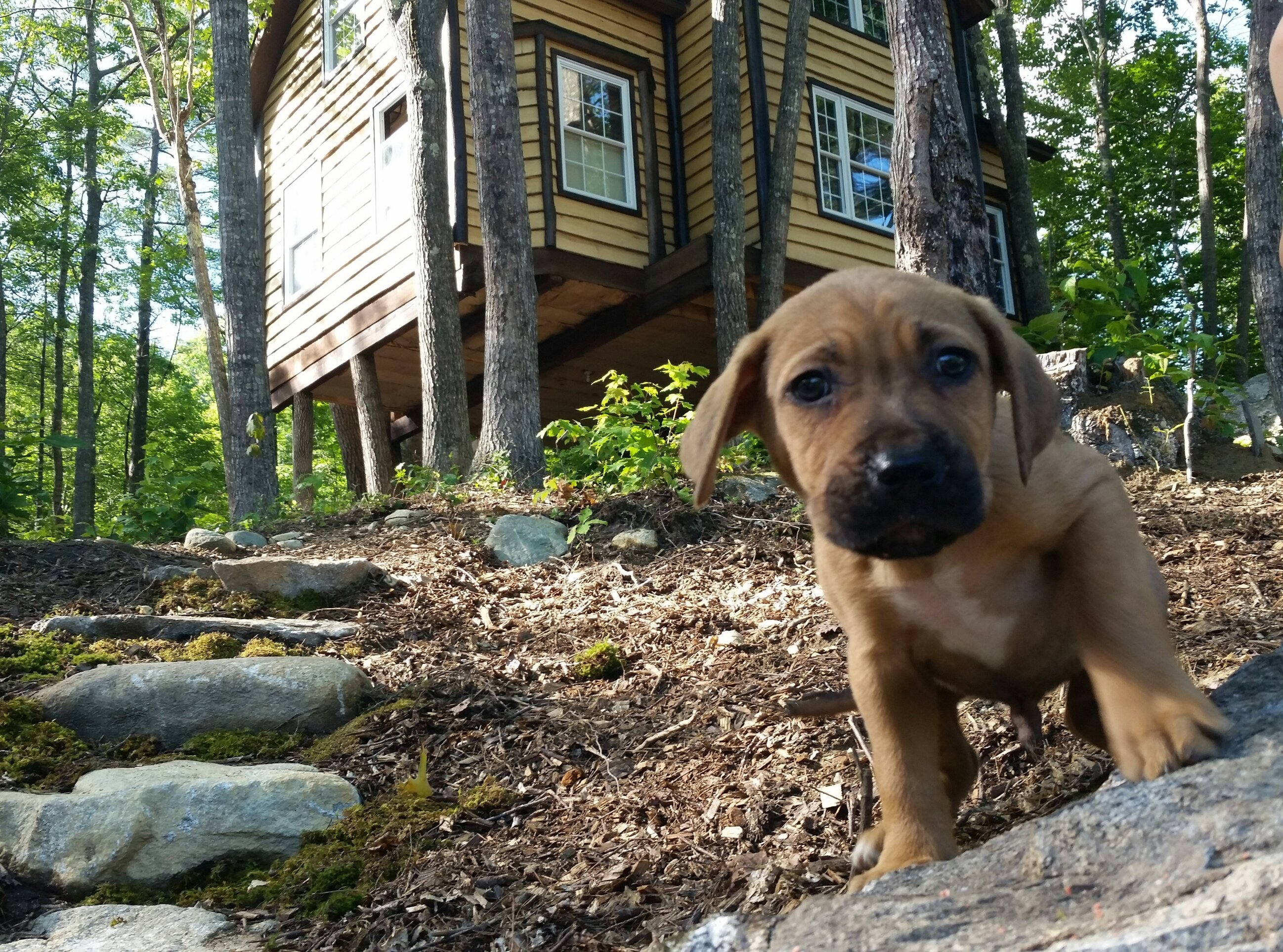 Our newest addition to TimberStone family, meet Timber!