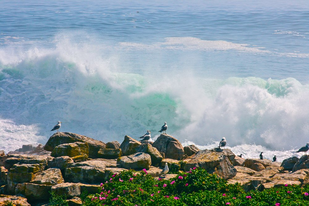 Seagulls rest on the rocks as waves crash onto the shore.