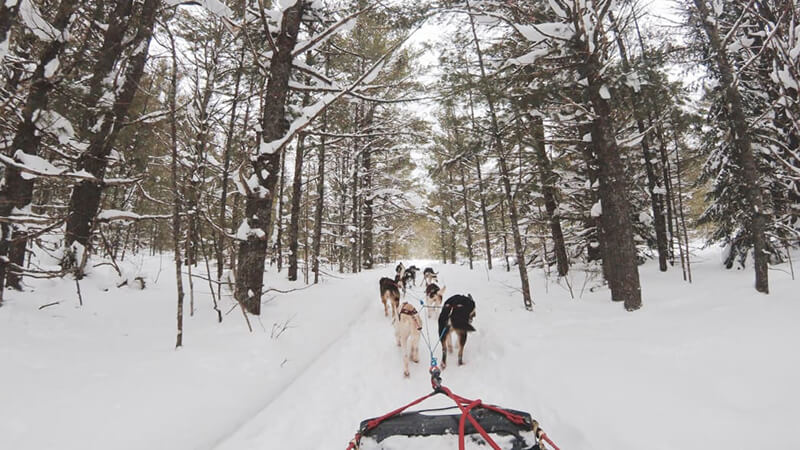 For a real thrill, go dog sledding through the wilderness in Maine.