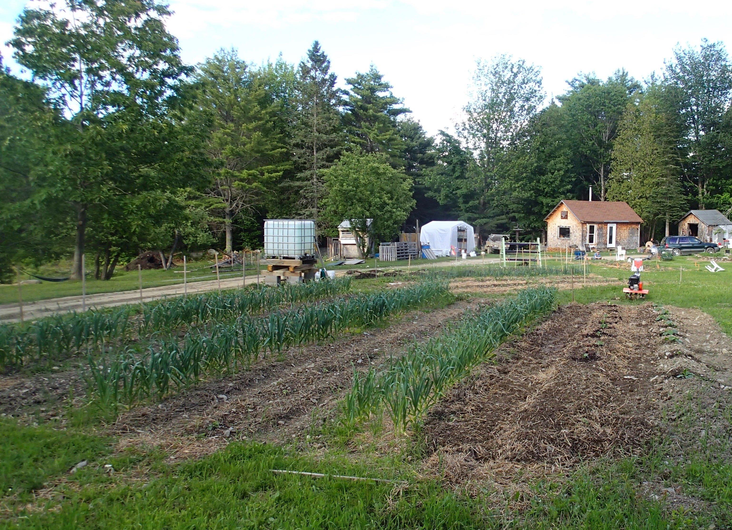 Rocky Hill Farm & Adventures Early Season Garlic Beds
