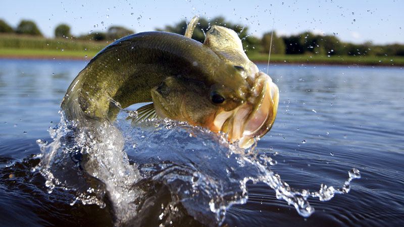 Bass Fishing Clubs