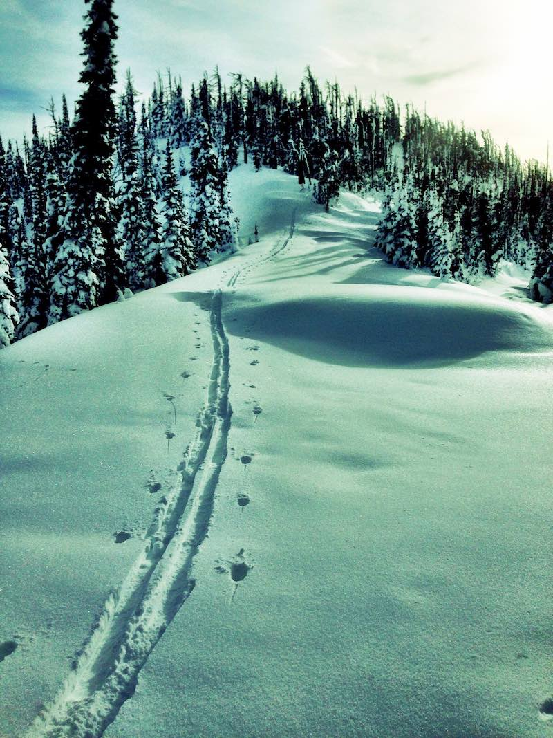Ski Track – Ken Wensel