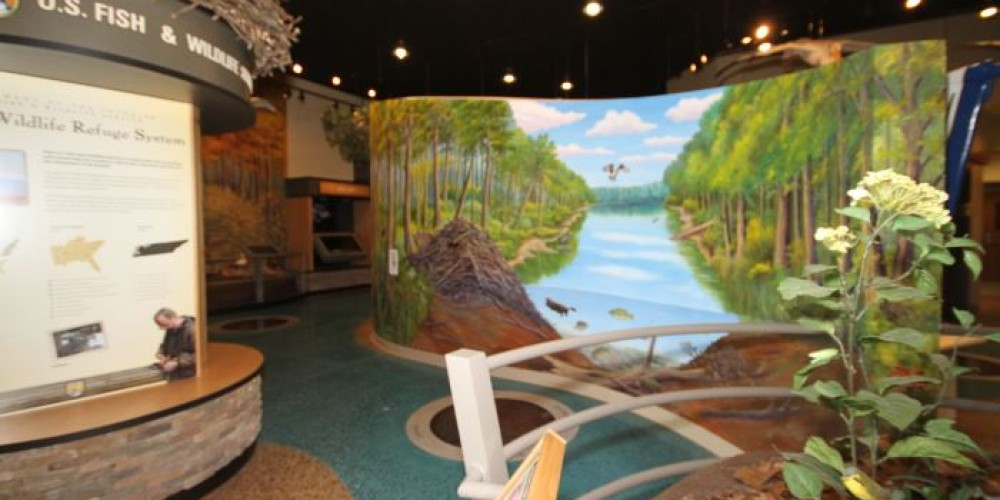 Tennessee National Wildlife Visitor Center Exhibit Hall. – Kimi Fitzhugh