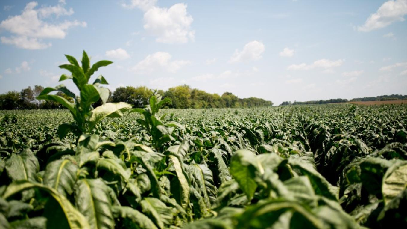 Old Trace Drive & Tobacco Farm (milepost 401.4) is a great place to get off the main road and see the countryside and fields of tobacco in the late summer/ early fall. – Cari Griffith