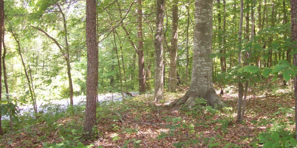 Portion of Militia Hill in wooded area where original trenches are located – Coal Creek Watershed Foundaiton, Inc.