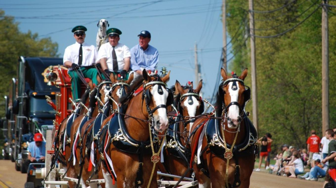 Occasionally the World Famous Budweiser Clydesdales pay a visit. – John R. Nichols