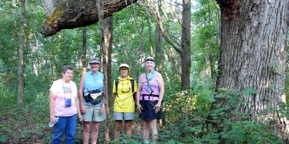Ladies Hiking Group standing near a very dramatic Oak Tree on the Coytee Loop Branch – Gail Eades