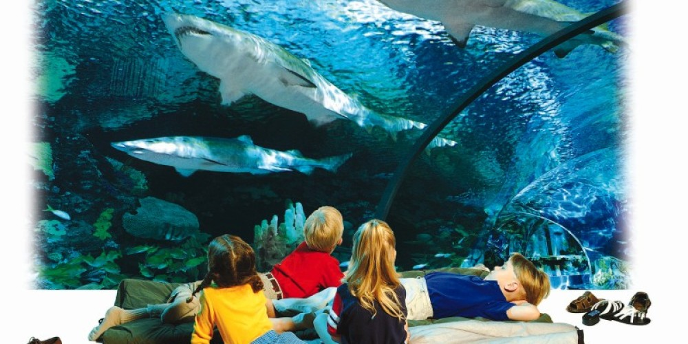 Sleep With the Sharks – Ripley's Aquarium of the Smokies & Charlie Brooks