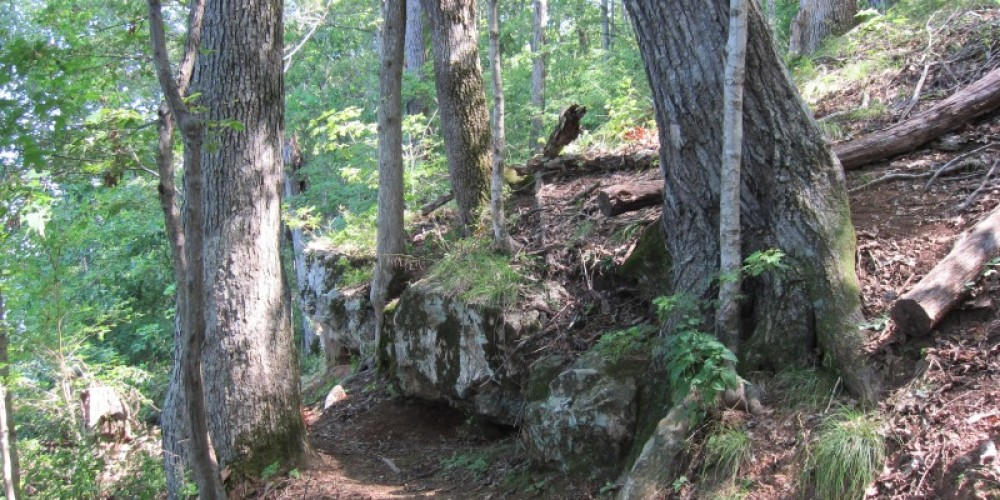 Large trees and rock outcropping on the Coytee Loop Trail. – Joel Fries