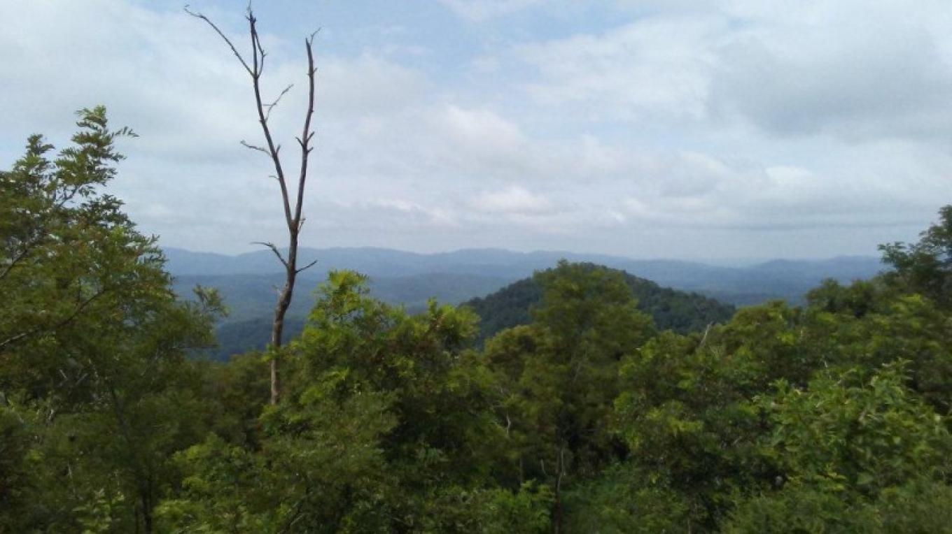 Mountain top view off the TWRA trails.