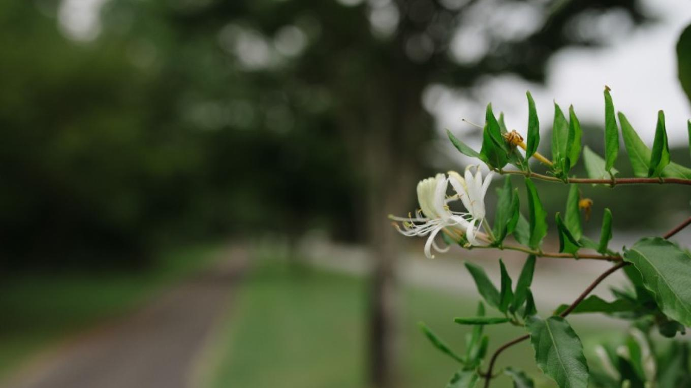 Honeysuckle and other native wildflowers adorn the park's walking trail. – Angie Neilson