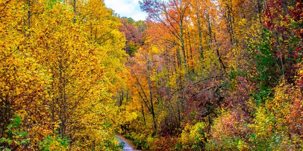 Beautiful fall foliage covers the roadway – Pioneer Vacation Rentals