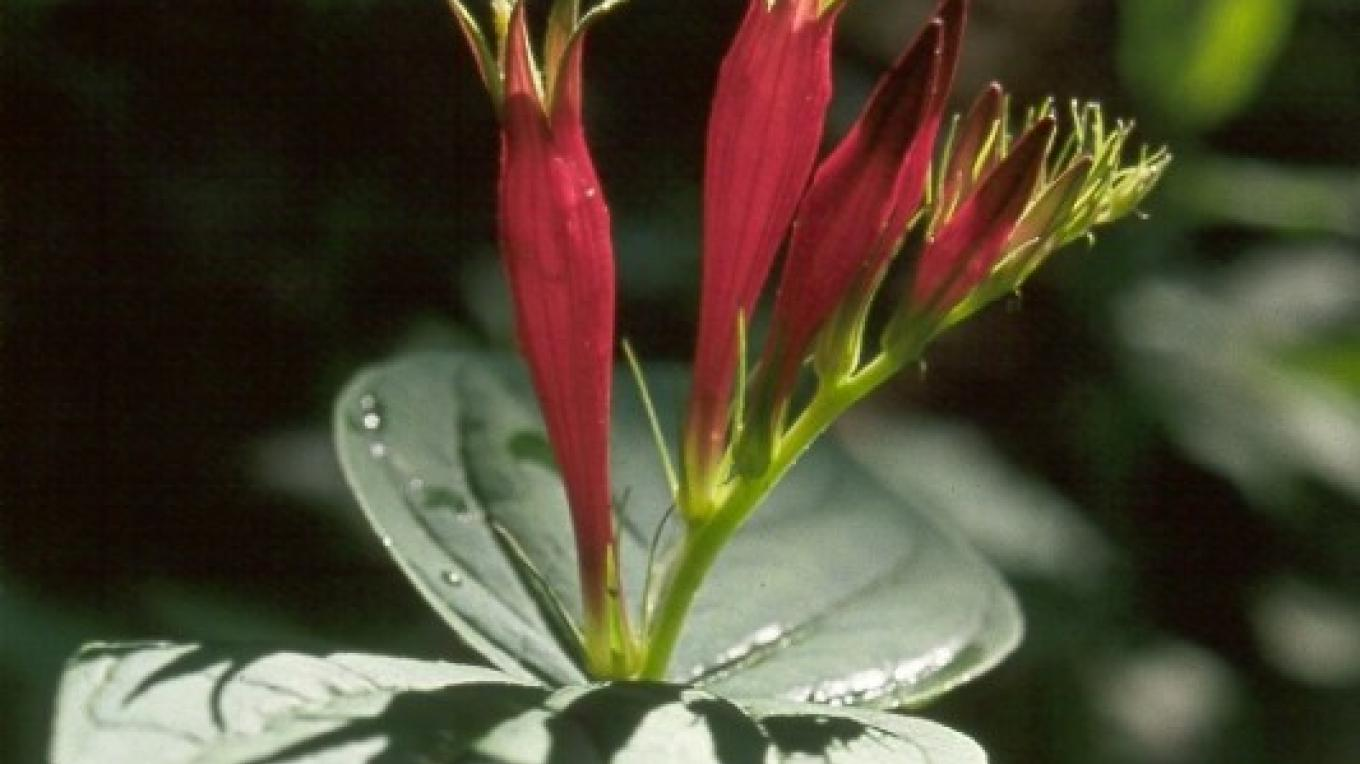 Indian Paintbrush is one of the wildflowers at Norris Dam State Park – State Photo