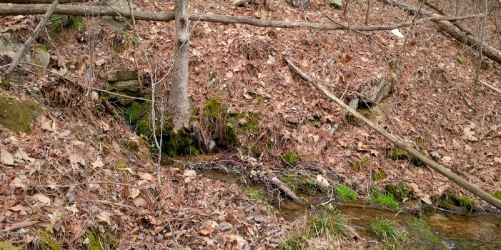 Spring fed creek off Honey Comb Trail – TVA