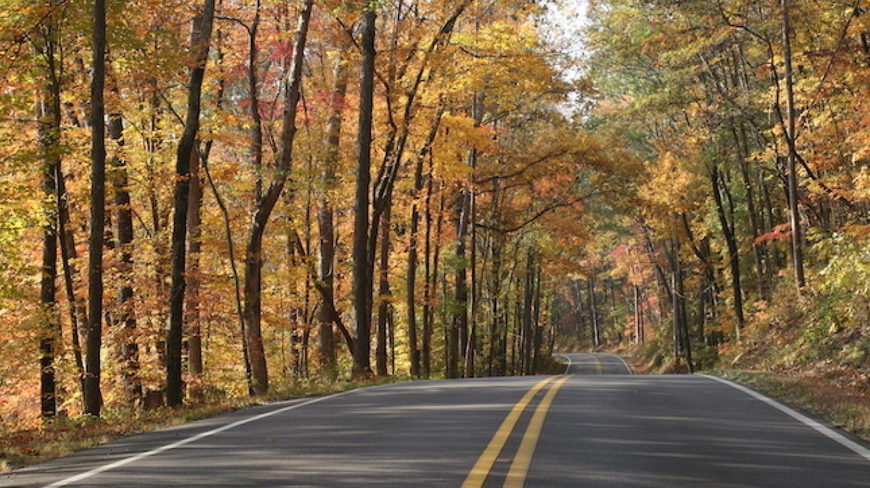 Fall in the Park – Brad Wiegmann