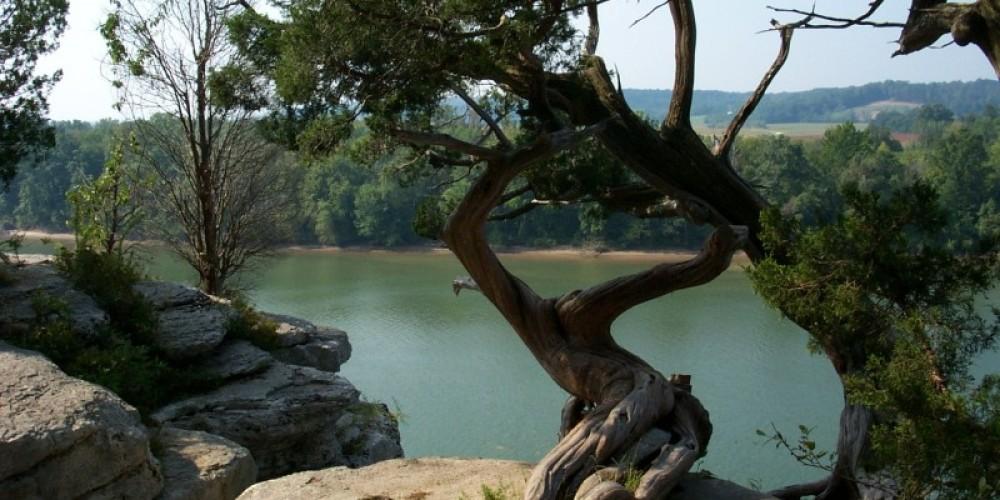 Cedar tree at Lady's Bluff Trail – TVA