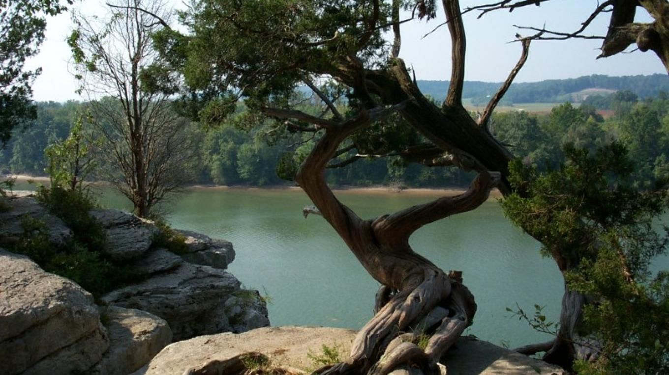 Cedar tree at Lady's Bluff Trail – TVA