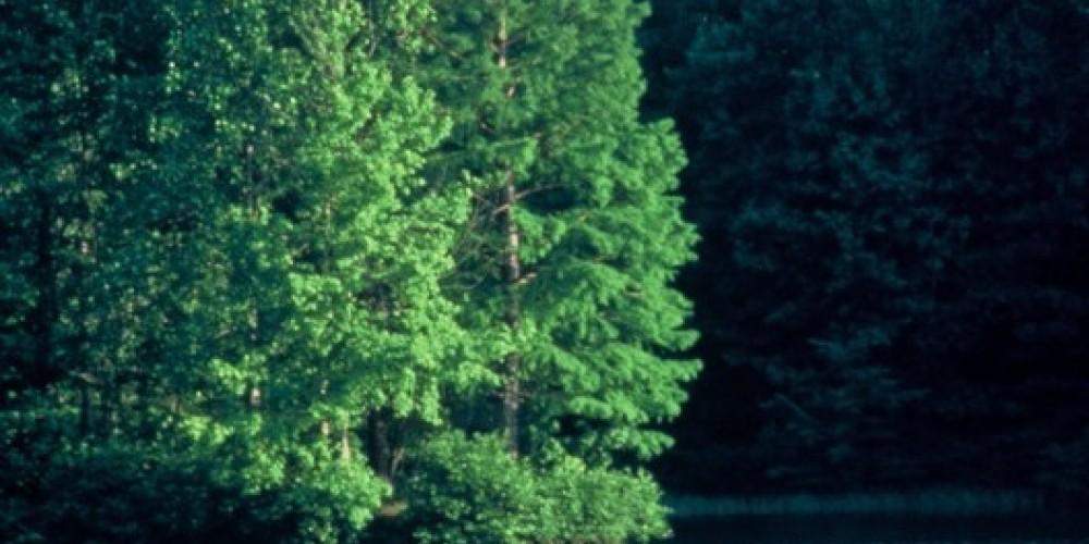 Parksville Lake – Jim Caldwell