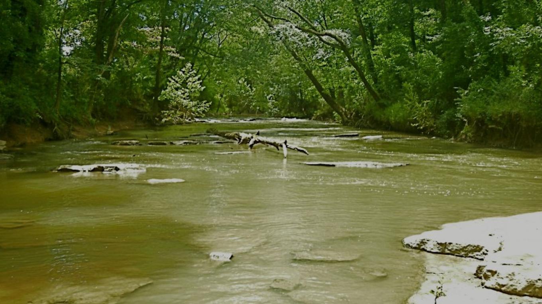 West Chickamauga Creek from Camp Jordan Bridge