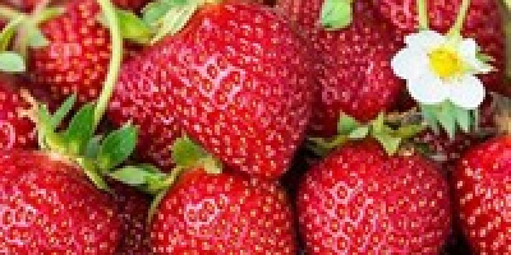 Garden fresh fruits. – Beth Bergeron