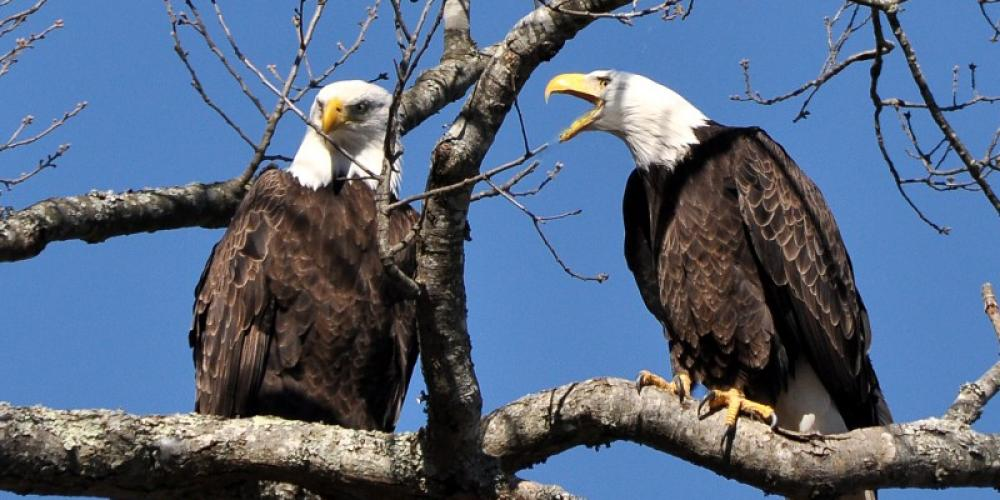 Birding at Fort Donelson is a popular pastime, especially in winter when the migratory birds visit. – Jean Owens