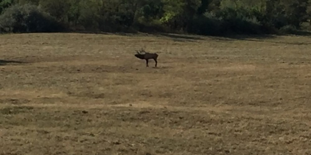 Elk sightings from the Elk Tower off the TWRA trails