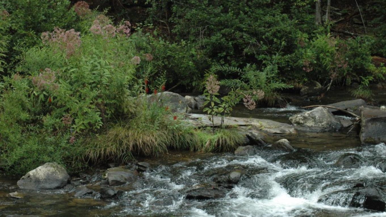 Tellico River – Jim Caldwell