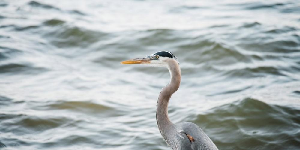 Paris Landing State Park's golf course is a certified Audubon Society Cooperative Sanctuary. – Cari Griffith