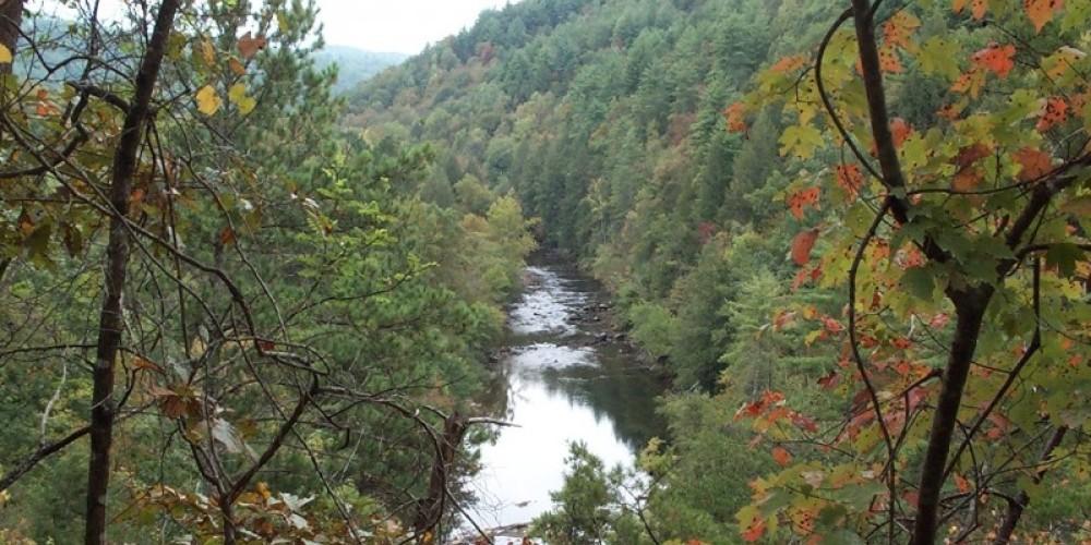 Conasauga River – Cherokee National Forest