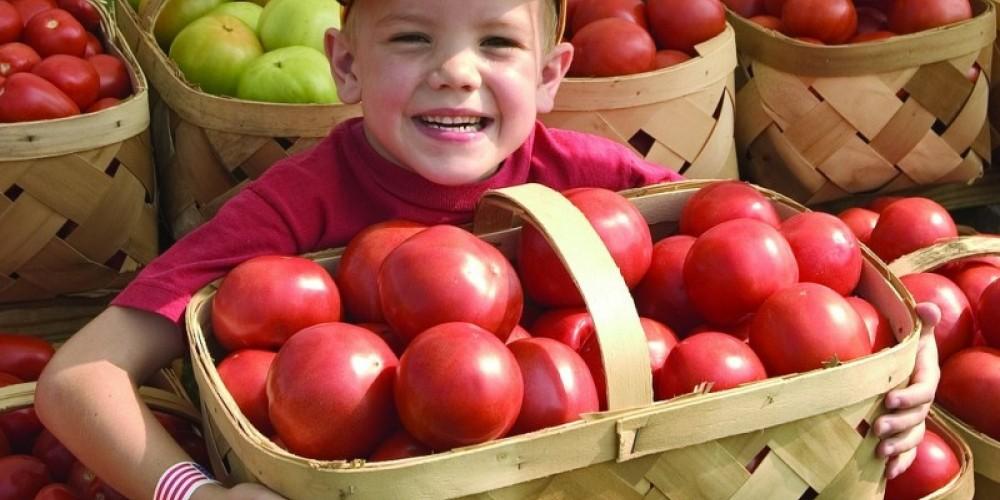 We got tomatoes! – Grainger County Tomato Festival file