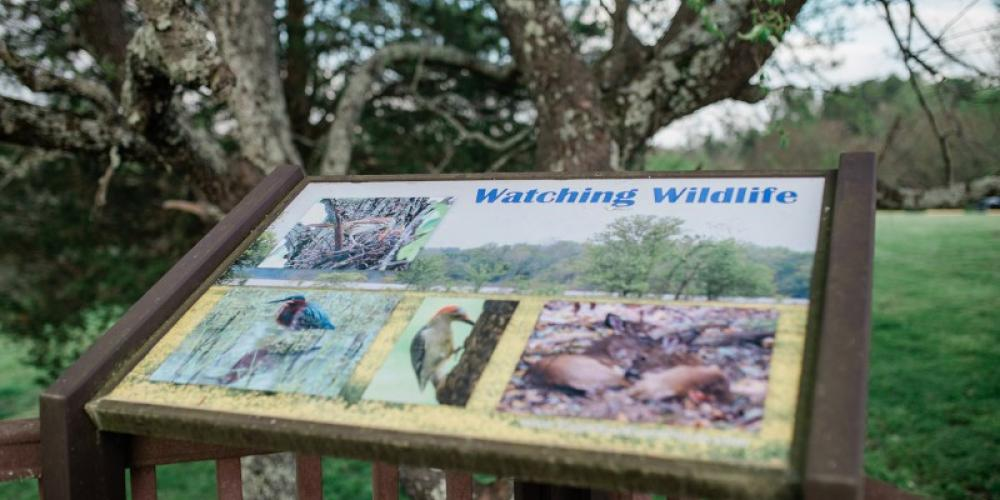 Cross Creeks National Wildlife Refuge – Cari Griffith