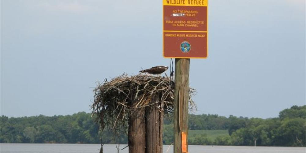 Osprey Nest – Blue Moon Cruses