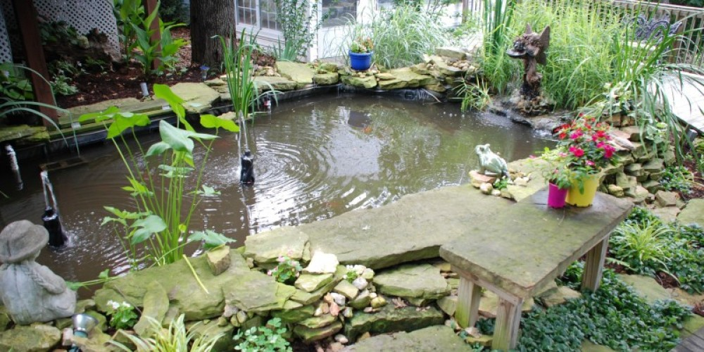 Relax and enjoy the Koi Pond – Ann Martin