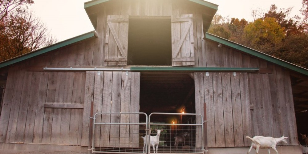 Bonnie Blue Farm