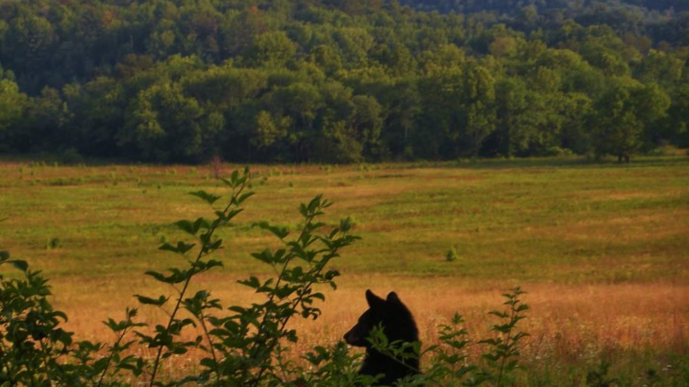 Black bear photo taken near GSM Outfitters – Michael Shepperd